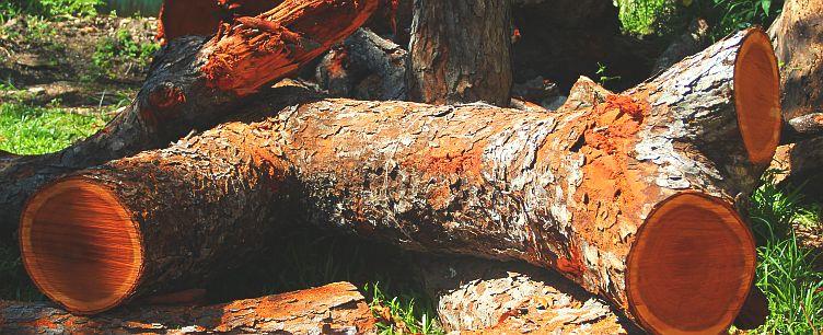 Махогони (красное дерево) редкий и ценный материал для столярного дела