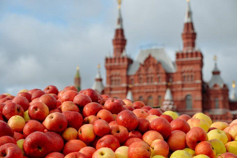 гастрономические фестивали, фестивали еды, вкусный календарь, гастрономические фестивали России